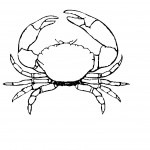 Crab Coloring Page Image