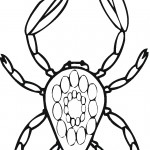 Crab Coloring Page Photo