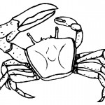 Crab Coloring Page for Kids