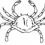 Crab Coloring Pages for Kids Images