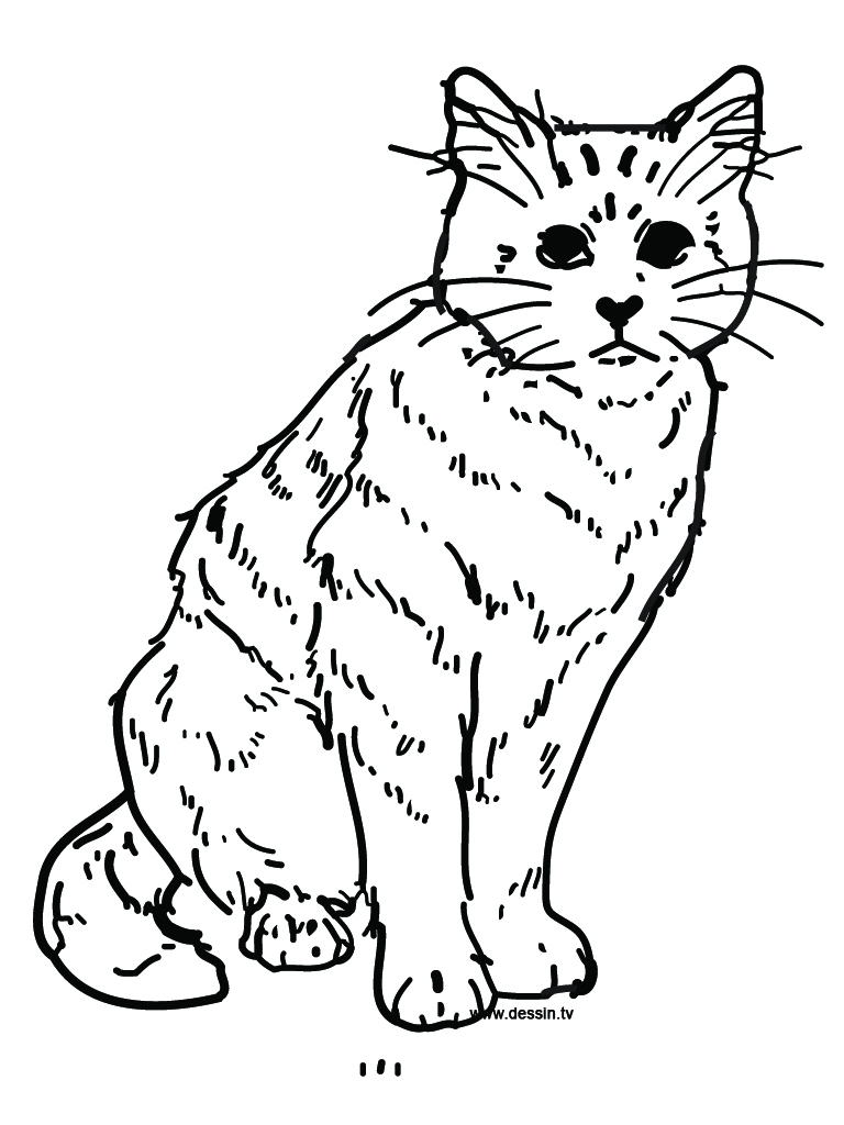 Free printable cat coloring pages for kids animal place for Cat coloring pages free