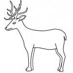 Deer Coloring Page Image