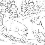 Deer Coloring Page Photo
