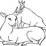 Deer Coloring Page Photos