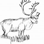 Deer Coloring Page Pictures