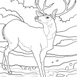 Deer Coloring Page for Kids Image