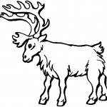 Deer Coloring Page for Kids Photo