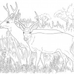 Deer Coloring Page for Kids Pictures