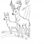 Deer Coloring Pages Images