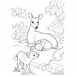 Deer Coloring Pages Picture