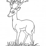 Deer Coloring Pages for Kids Photo