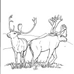 Deer Coloring Pages for Kids Photos