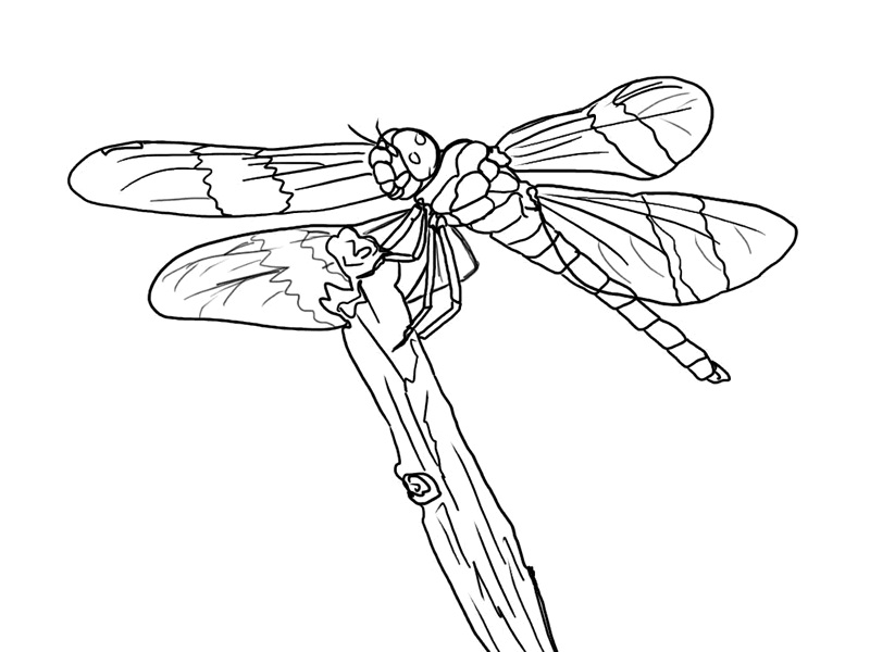 dragonfly pictures coloring pages - photo#23