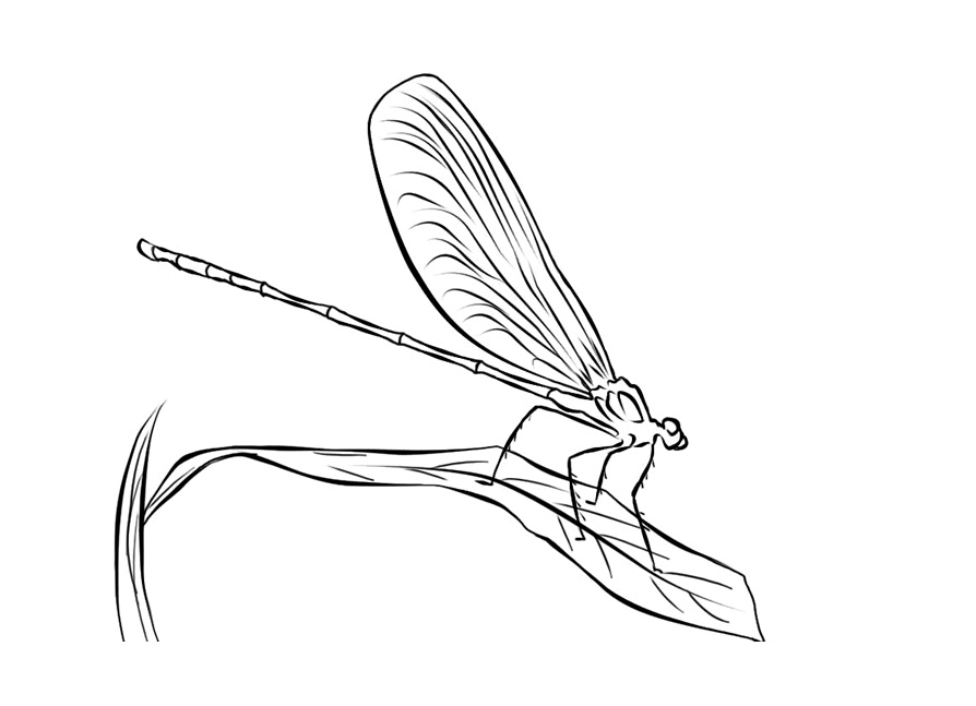 Free Printable Dragonfly Coloring Pages For Kids Animal