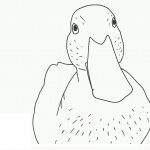 Duck Coloring Page Photo