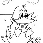 Duck Coloring Page Pictures