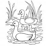 Duck Coloring Page of Kids Picture