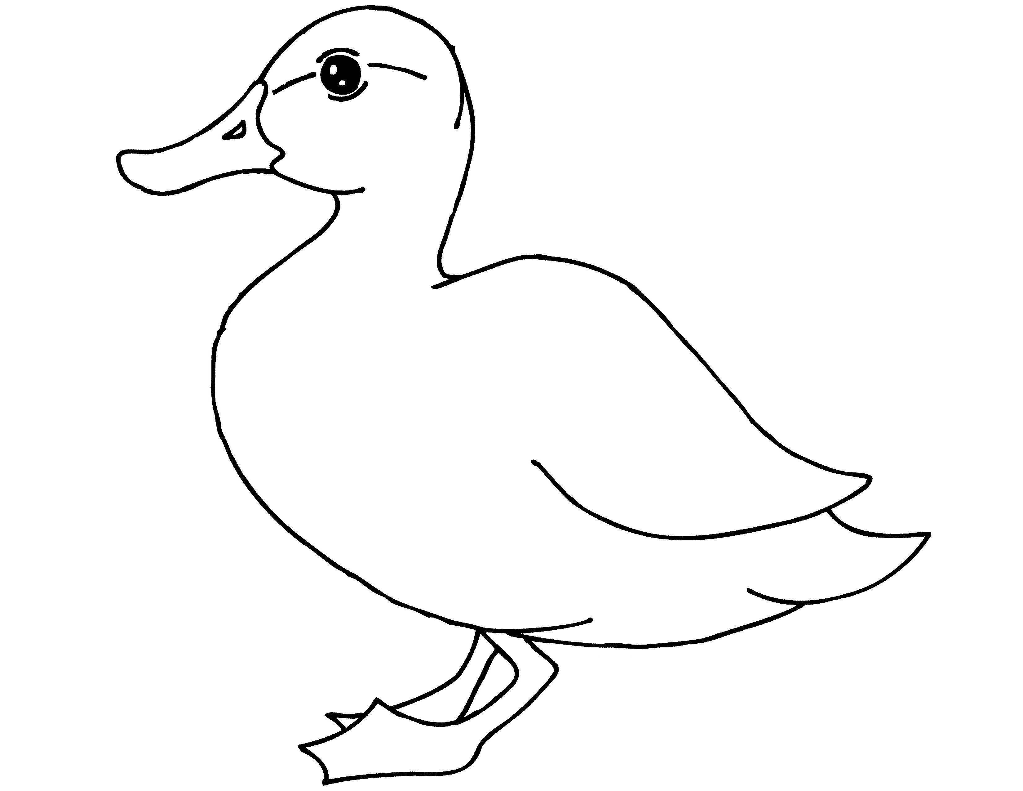 Free Printable Duck Coloring Pages For Kids   Animal Place