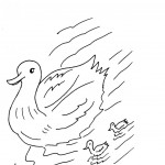 Duck Coloring Pages Photo