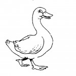 Duck Coloring Pages for Kids Image