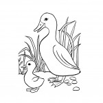 Duck Coloring Pages for Kids Picture