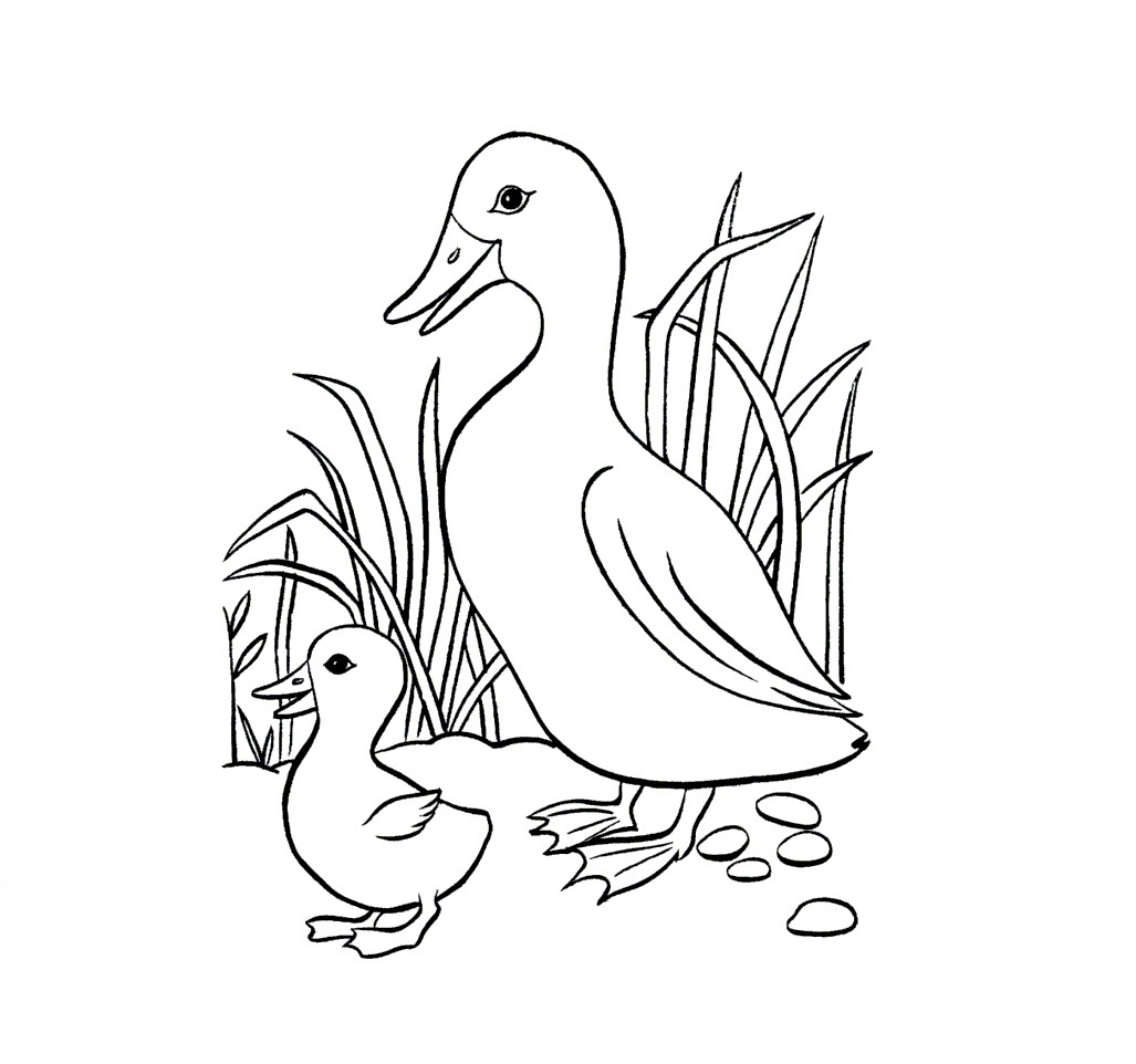 Free Printable Duck Coloring Pages For Kids | Animal Place