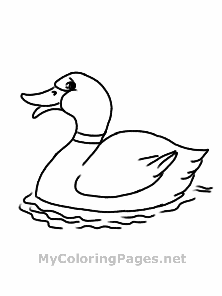 Free printable duck coloring pages for kids animal place for Mallard coloring page