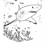 Great White Shark Coloring Pages