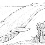 Great White Shark Coloring Pages Image