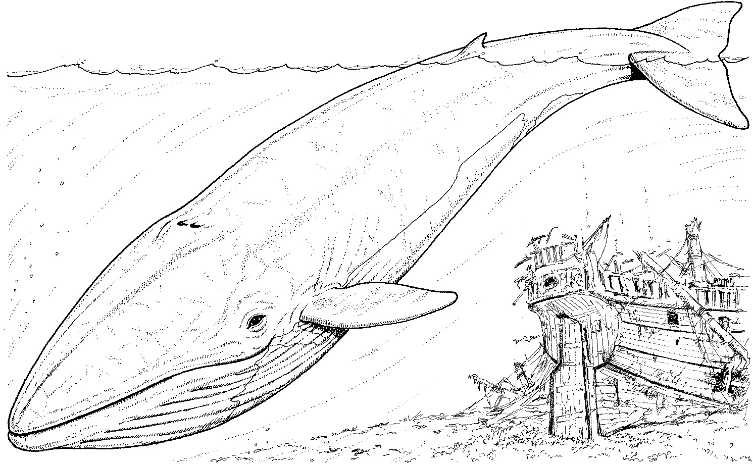 Free printable shark coloring pages for kids animal place for Great coloring pages