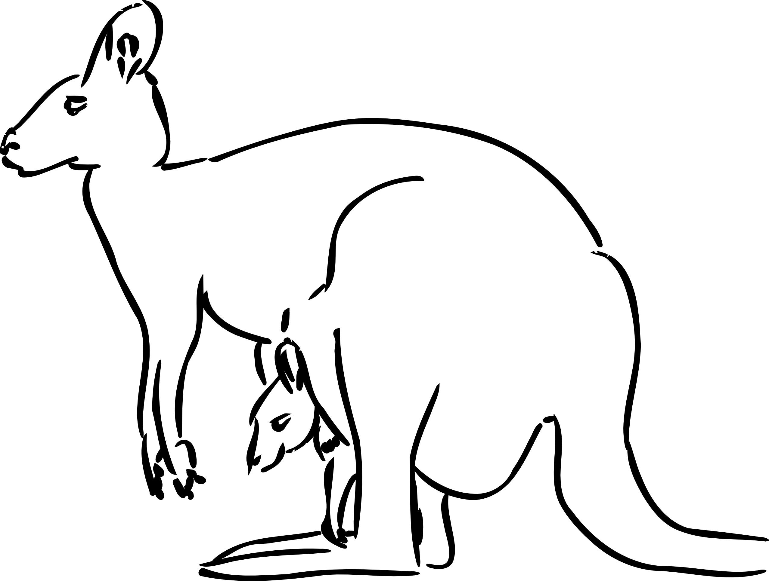 Coloring pages yak - Kangaroo Coloring Page Picture Free Printable Kangaroo Coloring Pages For Kids Animal Place On Kangaroo Coloring