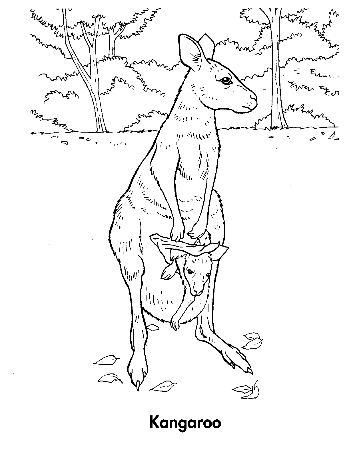 Free coloring pages kangaroo - Free Printable Kangaroo Coloring Pages For Kids Animal Place