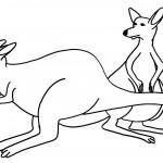 Kangaroo Coloring Pages Image