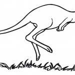 Kangaroo Coloring Pages Photos
