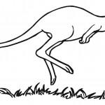 Kangaroo Coloring Pages Photos