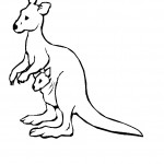 Kangaroo Coloring Pages Pictures