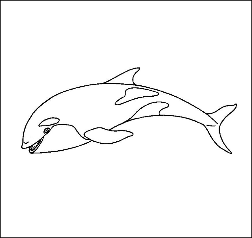 killer whale coloring page images