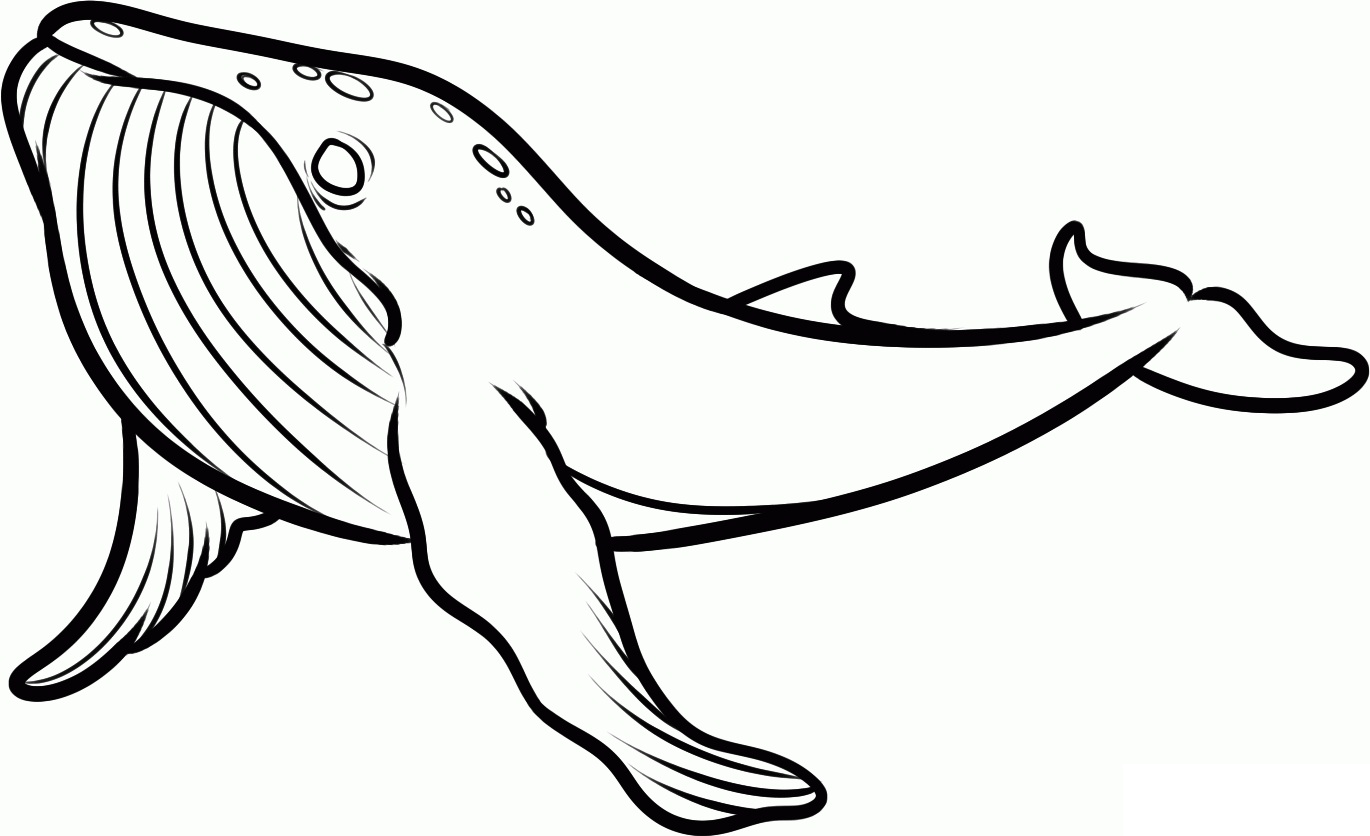 Free coloring pages killer whale