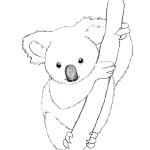 Koala Coloring Page Images