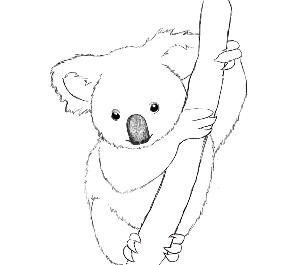 Line Drawing Koala : Free printable koala coloring pages for kids animal place