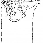 Koala Coloring Page Photos