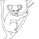 Koala Coloring Page for Kids Image