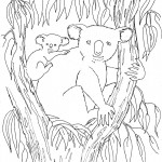 Koala Coloring Pages Photos