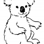 Koala Coloring Pages for Kids Images