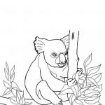 Koala Coloring Pages for Kids Picture