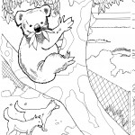 Koala Coloring Pages for Kids Pictures