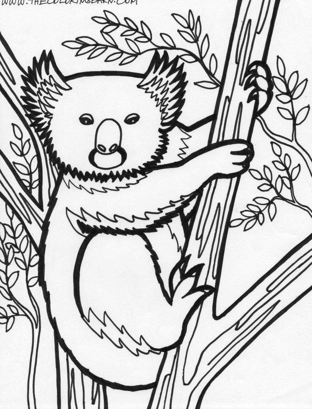 Printable coloring pages koala - Printable Coloring Pages Koala 32