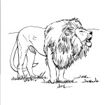 Lion Coloring Pages for Kids Pictures
