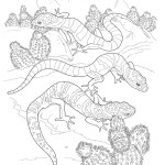 Lizard Coloring Pages Images