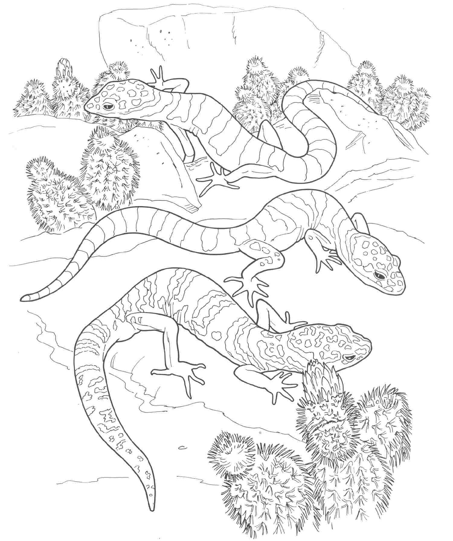 Lizards coloring pages to print - Free Printable Lizard Coloring Pages For Kids